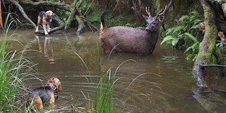 Hound Hunting Test - Benalla tickets
