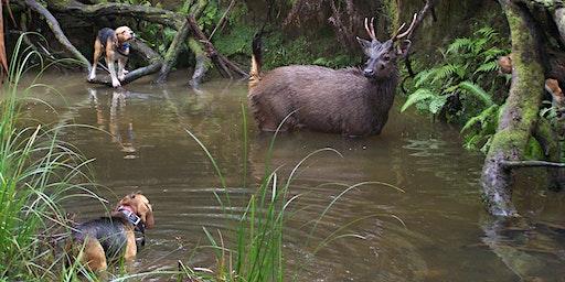 Hound Hunting Test - Benalla