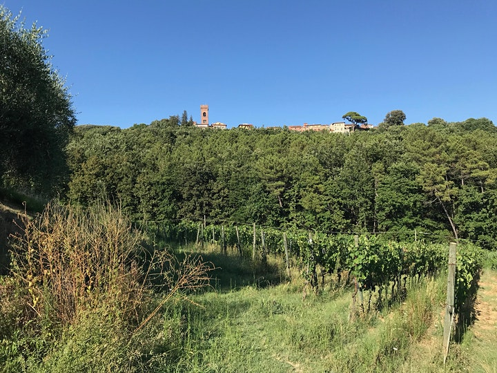 Immagine Wine tour - hills of Lucca and Montecarlo
