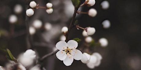 Pruning Fruit Trees Course / Cwrs Tocio Coed Ffrwythau tickets