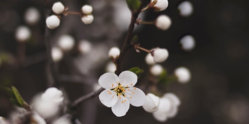 Pruning Fruit Trees Course / Cwrs Tocio Coed Ffrwythau