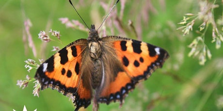 Butterfly Identification Workshop tickets
