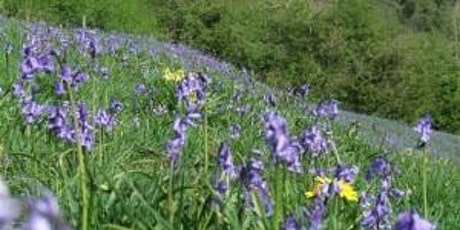 Guided Walk around Rose End Meadows and surrounding area. tickets