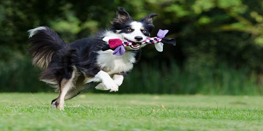 Monthly Kindness Project - DIY Dog Chew Toys
