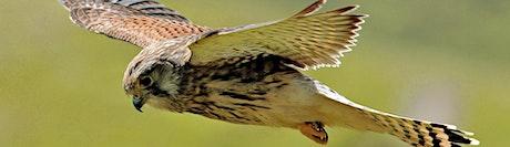 Birds of Prey (EWC 2806) tickets