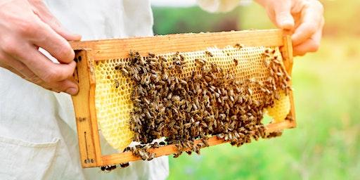 Beekeeping Basics 101