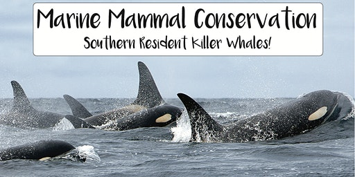 Marine Mammal Conservation - Spotlight on  Southern Resident Killer whales!