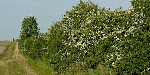 Hedgerow Discovery (EWC 2806)