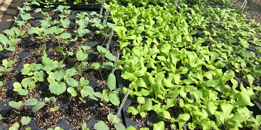 Vegetable Seed Starting