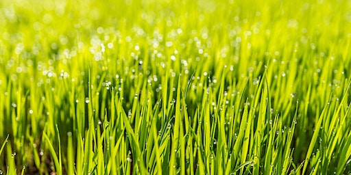 Spring Lawn Care - CH