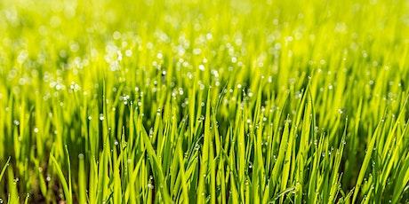 Spring Lawn Care - LO tickets