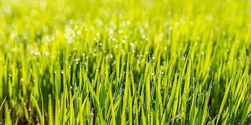 Spring Lawn Care - LO