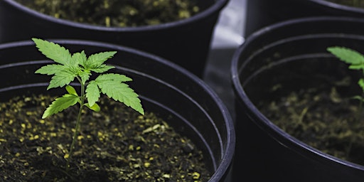 Cannabis Cultivation for the Home Gardener,  Part 3 of 10: Soil Food Web