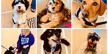 Puppy Classes - A Unique Programme for you and your puppy tickets