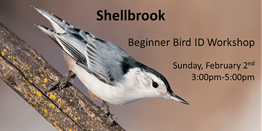 Shellbrook - Beginner Bird ID Workshop