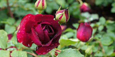 Roses: Planting, Care and Pruning tickets