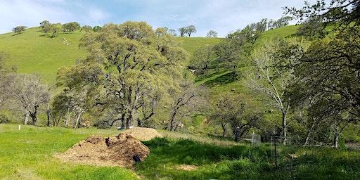 Diablo Restoration Team Workday—Marsh Creek 1 & 7