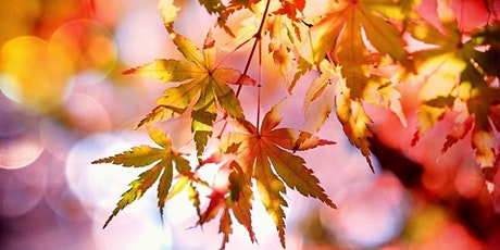 Japanese Maples: The Tree For All Seasons tickets