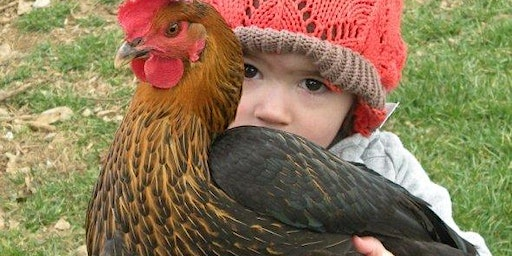 Everything You Need to Know About Backyard Chickens