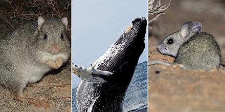 Threatened Mammal Index (TMX) showcase tickets