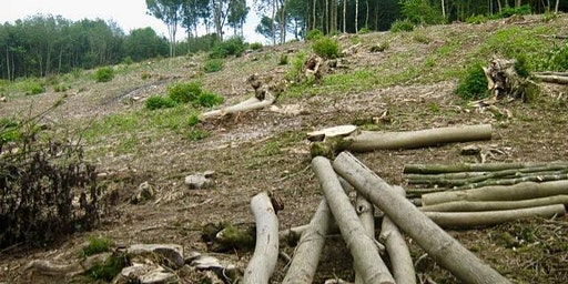 Woodland Coppicing at Hartshill Hayes Country Park