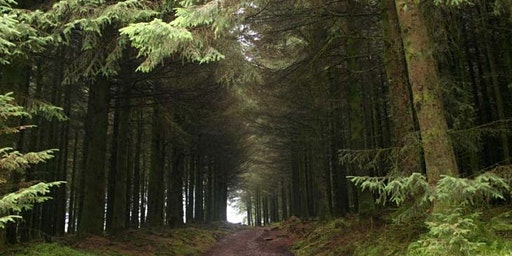 Tree Talks: Earth Day - What is the future of the forest in Devon?
