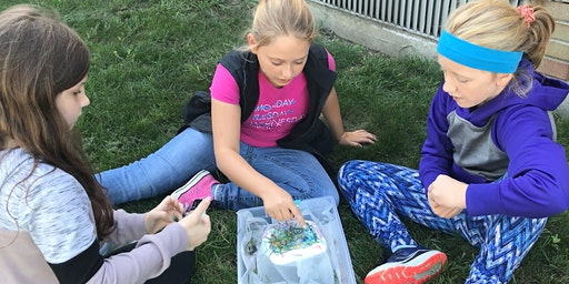 What's in Our Water?  Exploring the Grand River | Grades 4-6