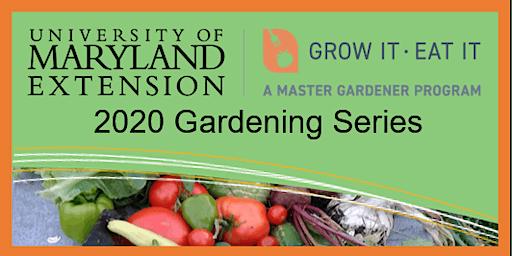 2020 CCMG GIEI Gardening Series: Seed Saving