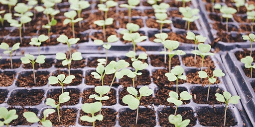 Spring Planting: From Seed to Seedling
