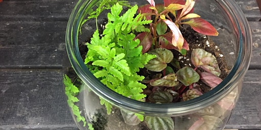 Teen/Adult Terrarium Workshop