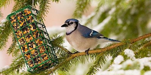 Bird Feeding Talk