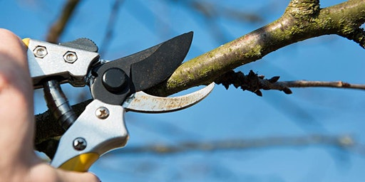 Winter Pruning Talk