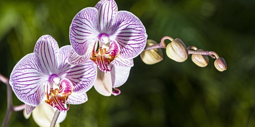 Orchid Care Talk