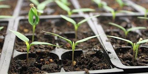 KIDS CLUB: Seed Starting