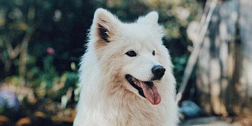 Healthy Pets Initiative: Free Vaccine & Microchip Clinic - Antietam Valley Recreation & Community Center