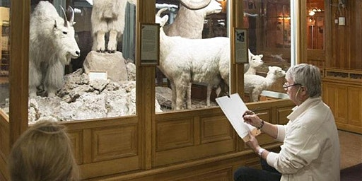 Free Drawing at the Banff Park Museum - February