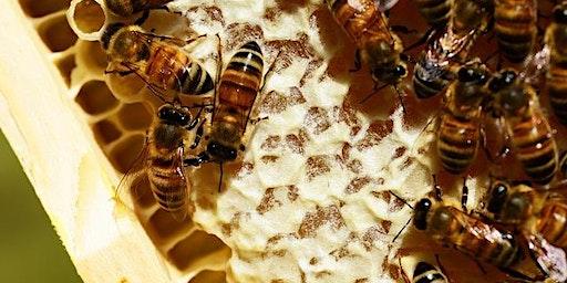 Backyard Beekeeping 201: The Next Level