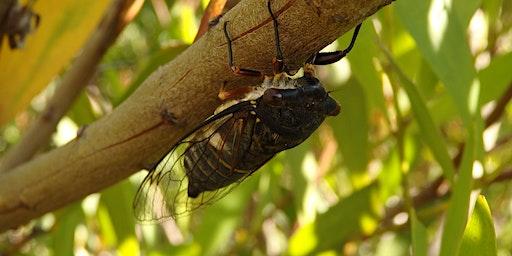 Bush Explorers - 'Wild Wednesday' - Bug Hunt - Peter Meadows Reserve