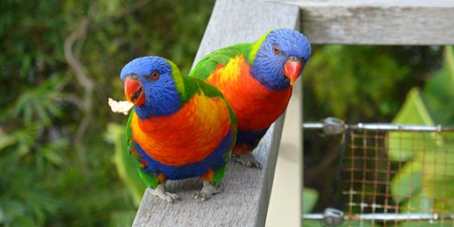 Bush Explorers - Birdwatching for Beginners - Park Central