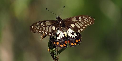Bush Explorers - 'Autumn Almanac' - Bug Hunt - Noorumba Reserve