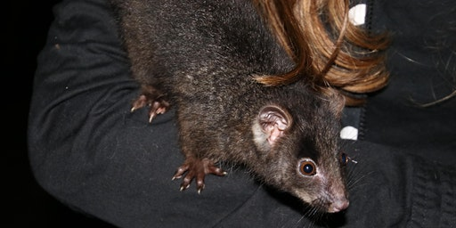 Possum Night Walk - Dunsborough