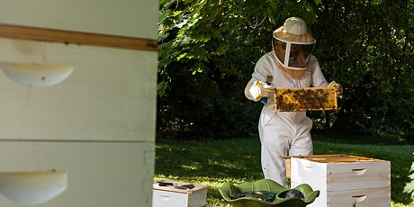Getting Started with Honey Bees: 2+ Day Course 2020  tickets