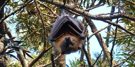 Bush Explorers - 'Autumn Almanac'- 'A Night with the Bats' - Milton Park tickets