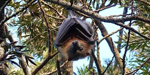 Bush Explorers - 'Autumn Almanac'- 'A Night with the Bats' - Milton Park