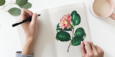 Introduction to Botanical Illustration – Adult Event