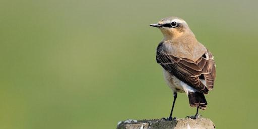 Blacka Moor Bird Walk