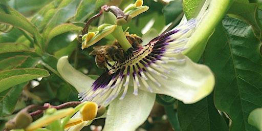 Surrey Bees CIO AGM 2020