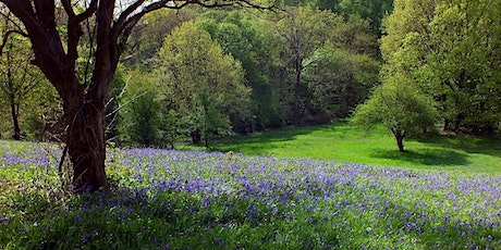 Woodland and Wildflower guided walk tickets