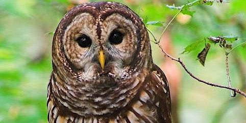 Owl Prowls