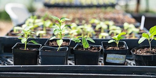 Grow Plants at Home with the Common Good City Farm CSA